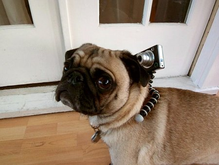Gorillapod gets dogs eye view