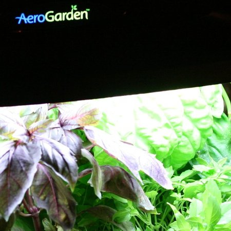 AeroGarden computer plant-pot promises perfect harvest