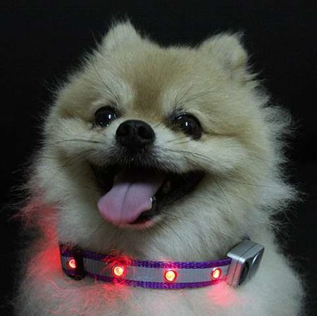 Flashing LED dog collar on sale  - photo 1