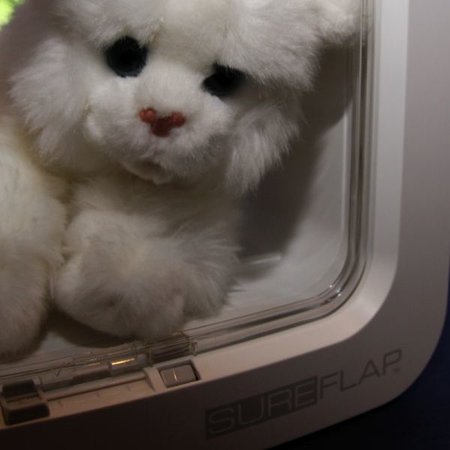 Cat flap goes high tech with RFID technology