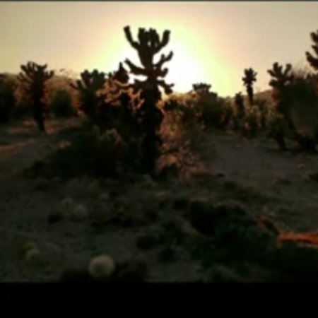 VIDEO: Joshua tree filmed by Panasonic Lumix GH1