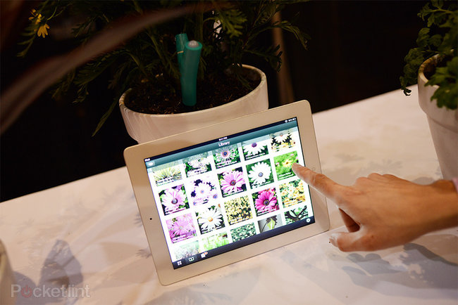 Parrot Flower Power lets you know when your plant is thirsty - photo 10