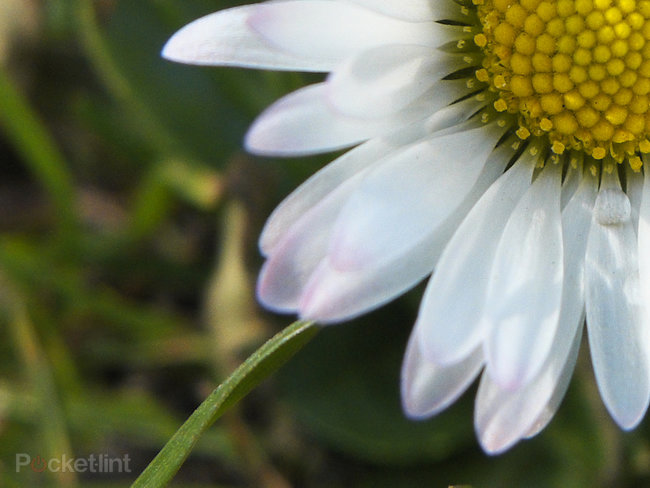 Fujifilm X20: The first sample images - photo 4