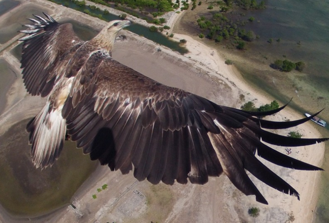 These amazing aerial views from drone photo contest won National Geographic prizes - photo 1