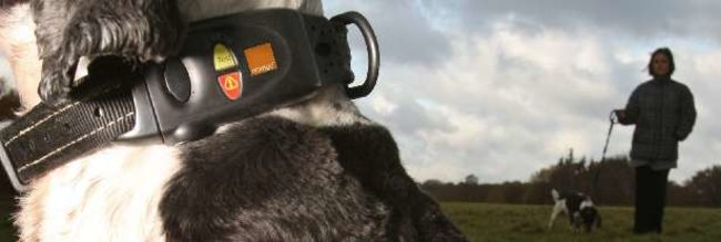Orange launches SIM-based dog tracking system - photo 2