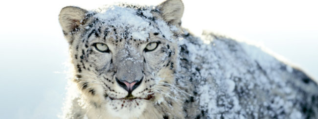 The 10 hidden gems of Snow Leopard - photo 2