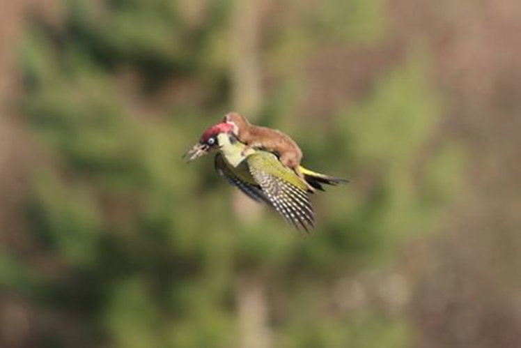 WeaselPecker: Why the internet