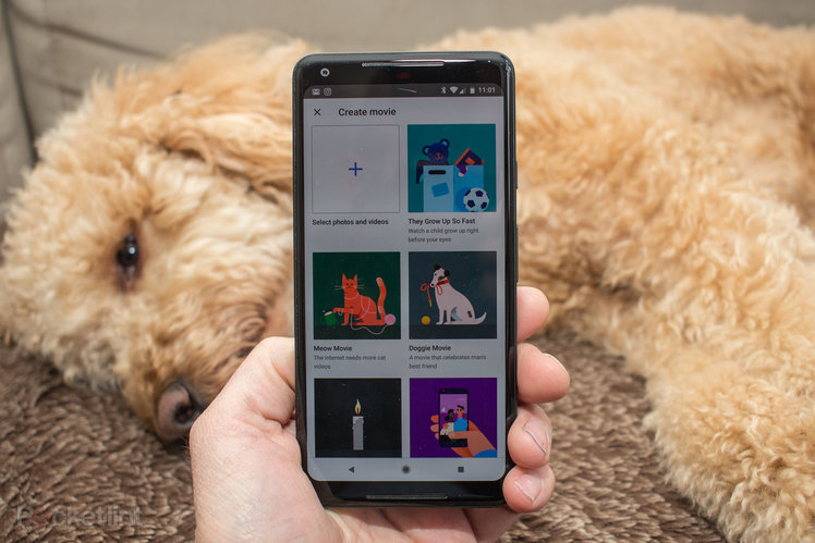 Google Photos: How to create themed movies of your cat, dog or loved ones