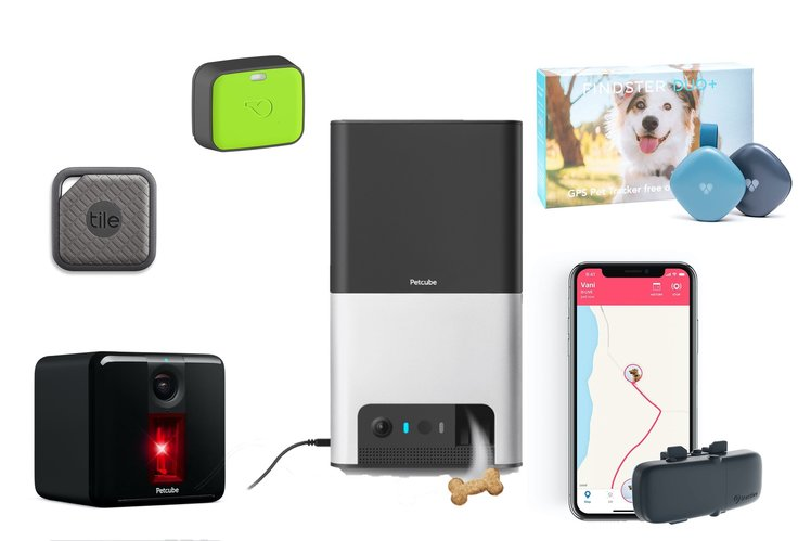 Best pet trackers 2020: Wearables and cameras to keep your animals safe