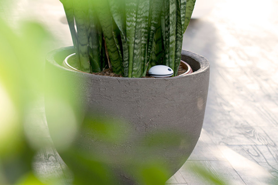 koubachi wi fi plant sensor hits uk in time for chelsea flower show image 1